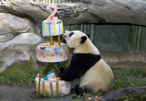 Feliz cumpleaños oso panda - Imagui